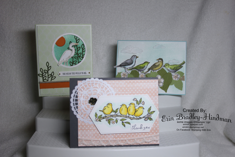 Birdsclass